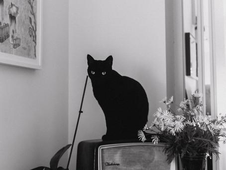 A Casa, a Família e o Gato