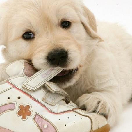 Enamorarse de un cachorro, un compromiso a largo plazo.