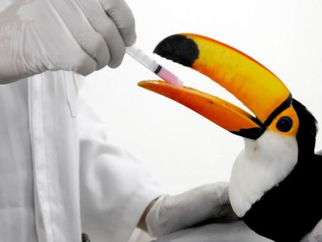 Gramadozoo recebe 23 aves vítimas do tráfico
