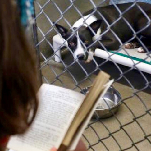 Florida Inmates Spent 4th of July Comforting Scared Shelter Dogs