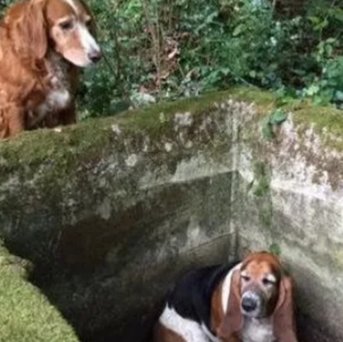 Doggy Devotion: Dog Stands Guard for a Week Until Trapped Friend Is Found