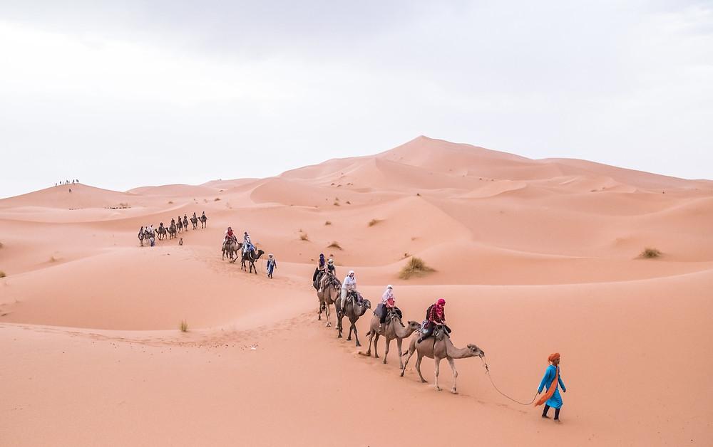 Camel or dromedary ouarzazate morocco