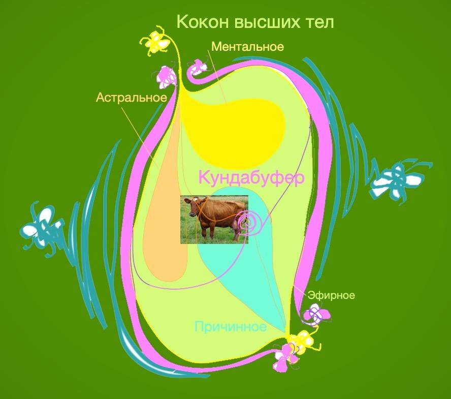 Душа, кокон высших тел Коровы, с защитным органом Кундабуфером
