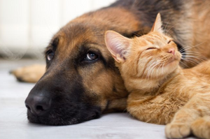 Shelter cat and dog kindakind kindness is badass