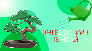 Инвестиции в бонсай. Как обычное растение может принести кучу денег