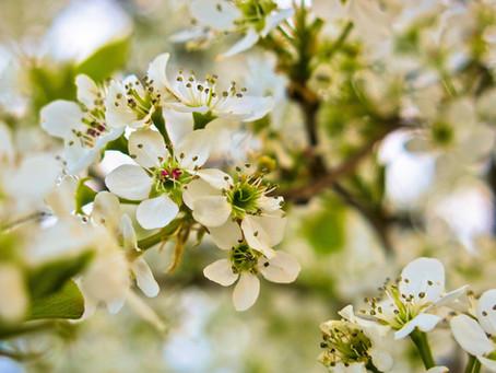 Har du pollenallergi?