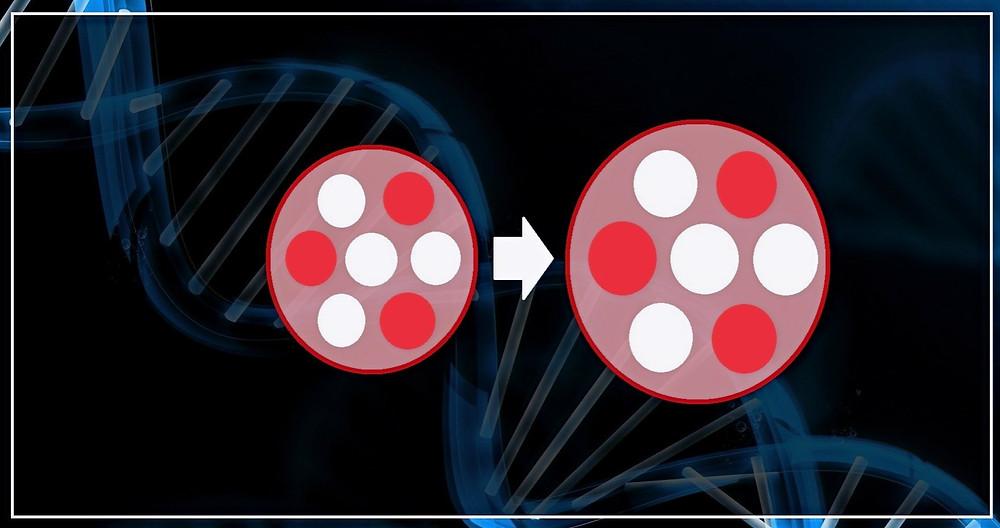 Wirkung von Krafttraining auf Muskulatur