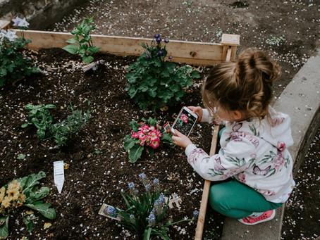 How's Your Garden Growing?