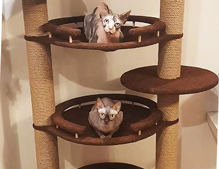 Недорогие игровые комплексы для кошек. Наш опыт.