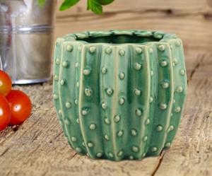 plant pot cactus