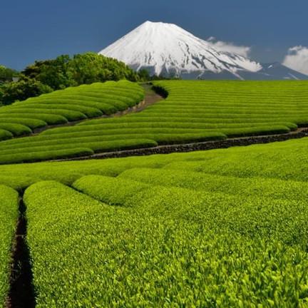 Escapades dans la campagne japonaise