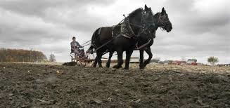 Leadership: The Show Horse and the Plow Horse