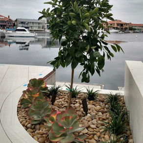 Urban Edibles for Rooftop Gardens
