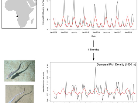 NEW PAPER: Evidence for Migrations in Deep Demersal Fishes
