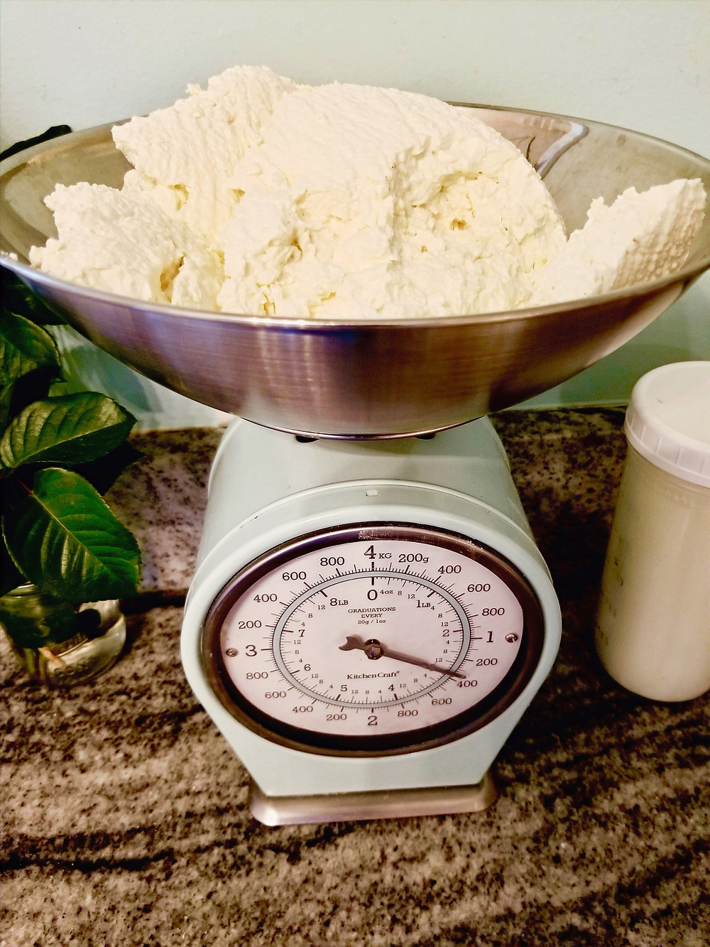 Homemade farmer's cheese on a kitchen scale