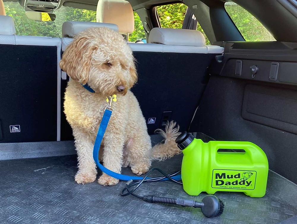 Cockapoo dog looking at a green mud daddy portable dog washer