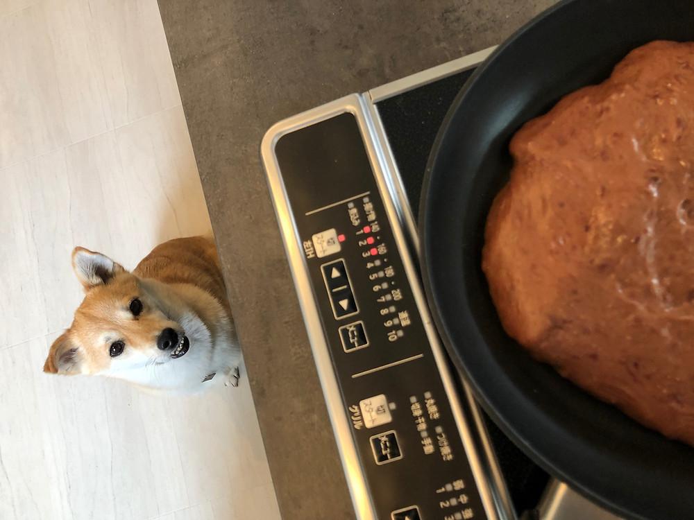 レバーケーキのつくり方(埼玉県川口市ドッグトレーニング)