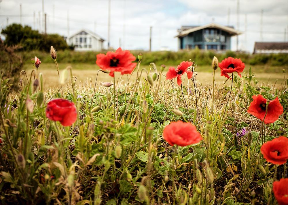 Felixstowe Ferry - photo ©Jen Maltby