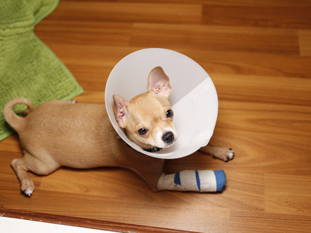 Paw Injuries and your Dog