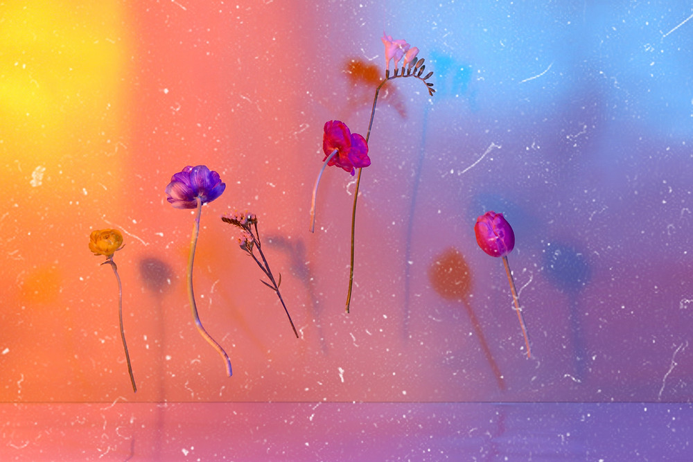 floating flowers on a colourful background