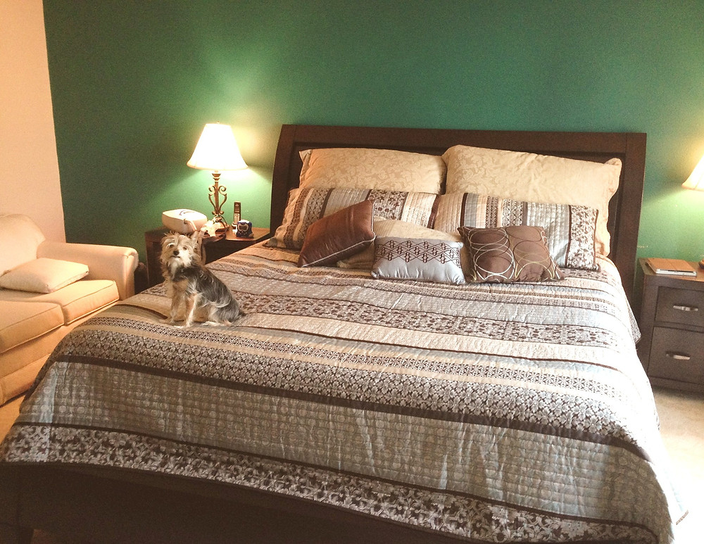 My puppy, Bruno, helped me make the bed.