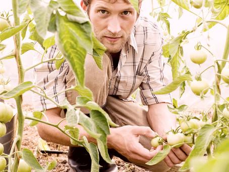 Potagers et vergers en permaculture