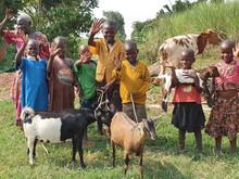 Ziegenprojekte verändern das Leben