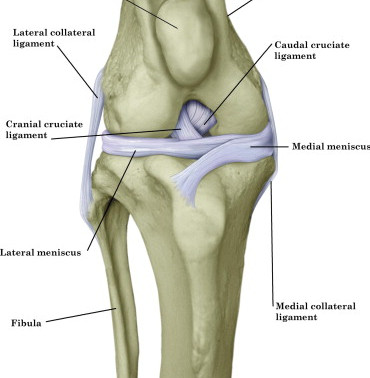 Cruciate injury - Now What?