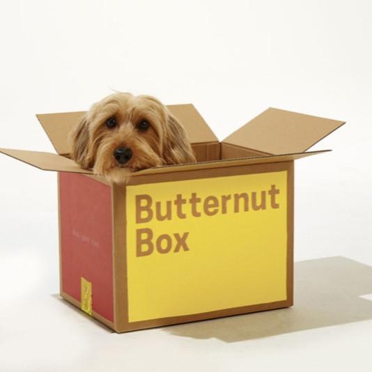 Dog in a butternut box dog food box