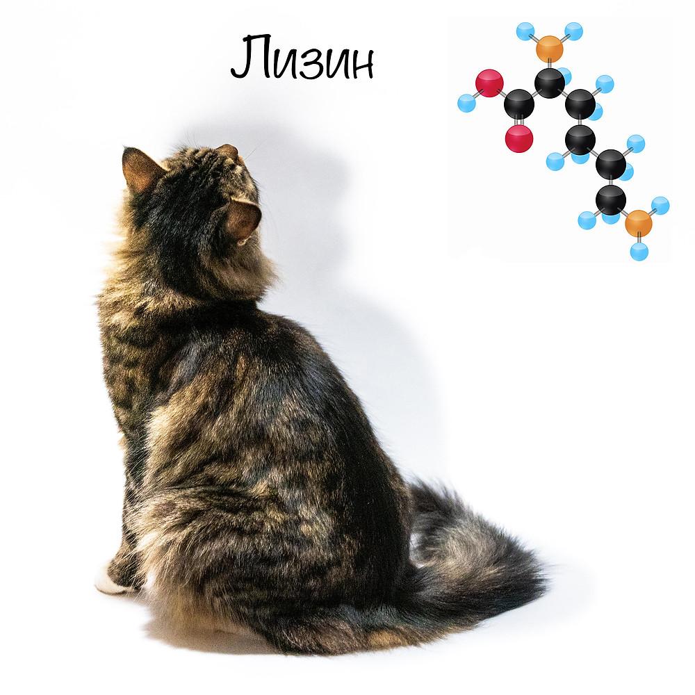 Лизин в рационе кошек