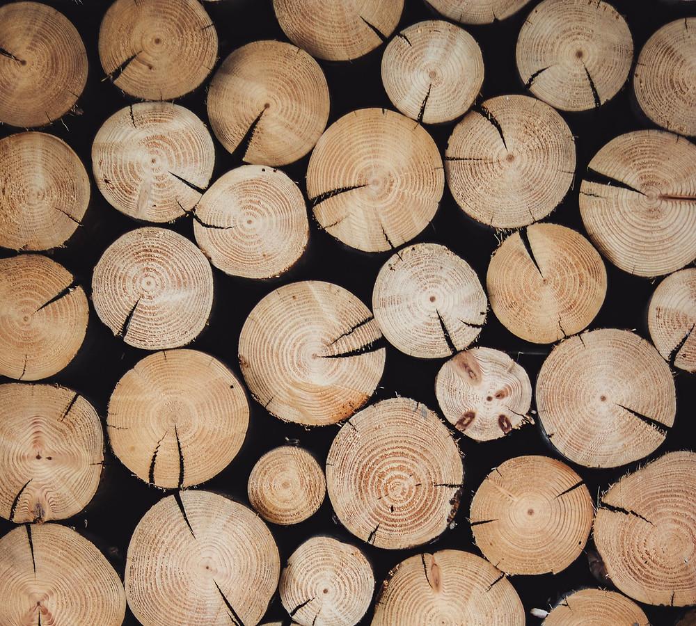 exportar madeira