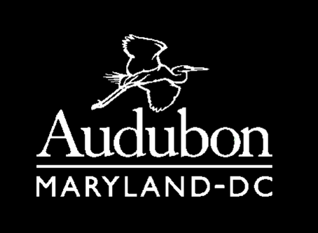 Audubon of MD Seeks Volunteers