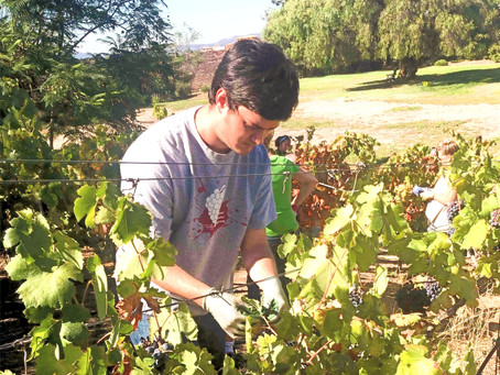 Pandemic Didn't Stop TMI Clients with Developmental Disabilities from Completing Viticulture Program