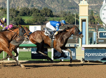 8 Facts About Kentucky Derby Contender Thousand Words