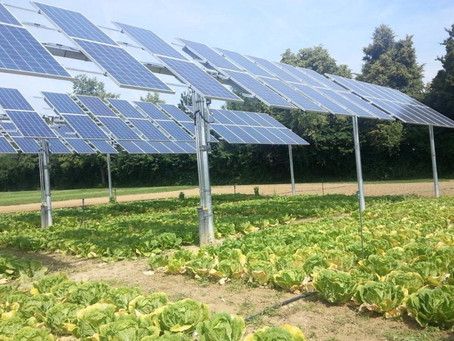 Some Salad With Your Solar Panels?