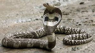 COVID-19 and its impact on snakebite care in India: a bane or a boon?