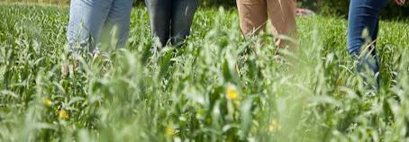 Organic Farm Walk Programme