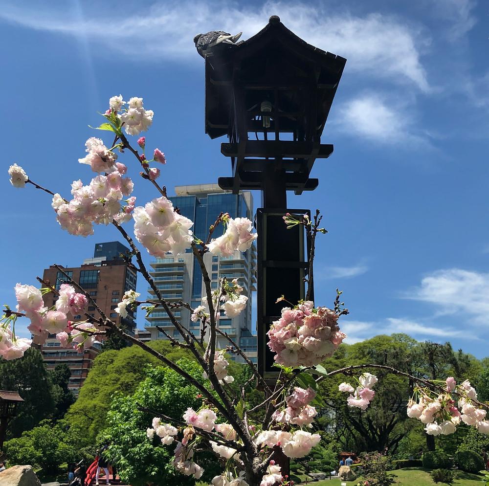 Sakura Buenos Aires