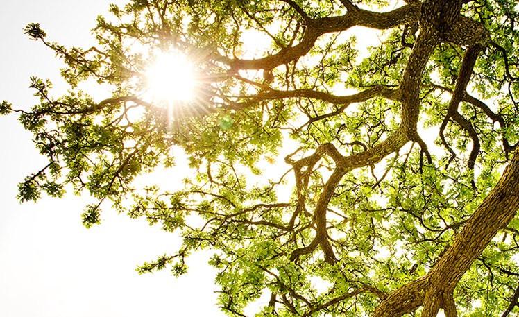 sunshine provides Vitamin D to boost immunity