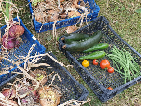 Leaf Mould, Last Pickings, and 'Spring Bulb Lasagne'