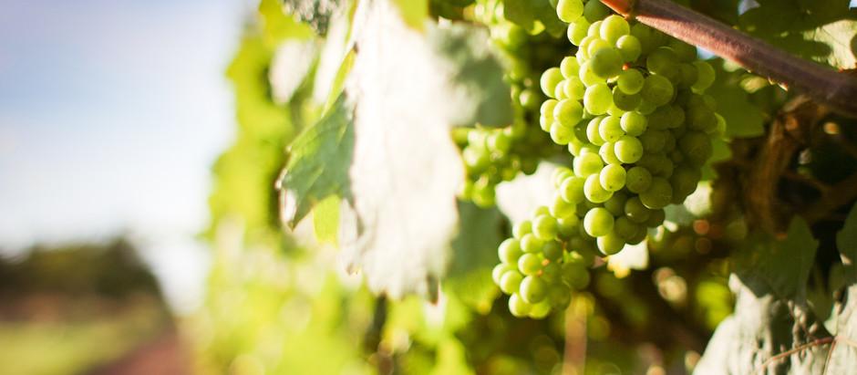 """Alentejo - Traumhafte Orte, tolle Landschaft, hervorragender Wein und """"Porco Preto"""""""