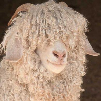 mohair, goat, natural, wool