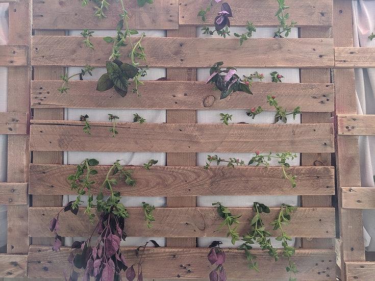 הכנת קיר ירוק לגינה