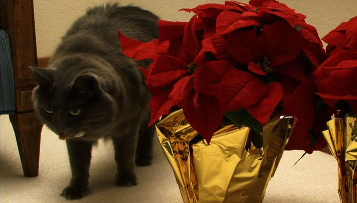 Keeping Pets Safe During Holidays, Part 2