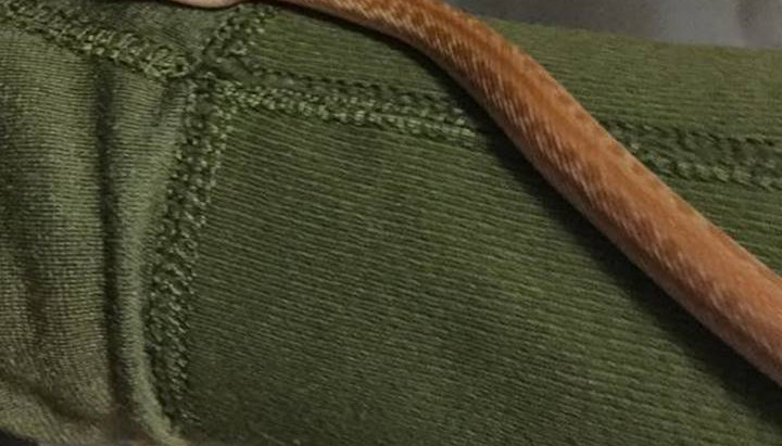 House snakes: a new addition