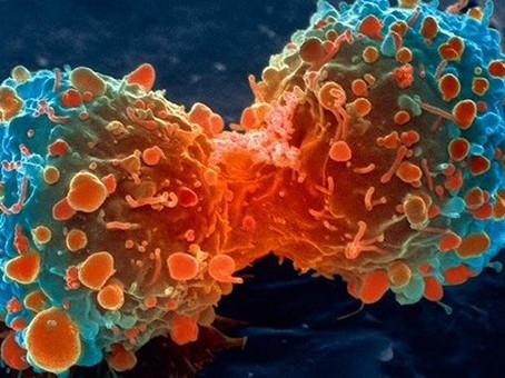 Qual a relação da alimentação e o câncer?