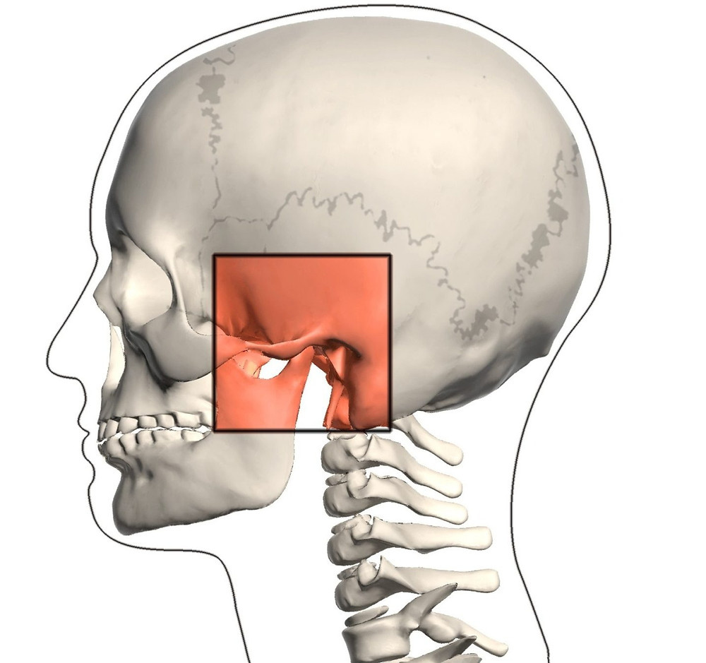 La articulación temporomandibular tiene mucha mas importancia de la que nos pensamos.