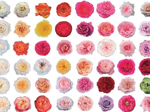 Celebrate National Rose Month in June!