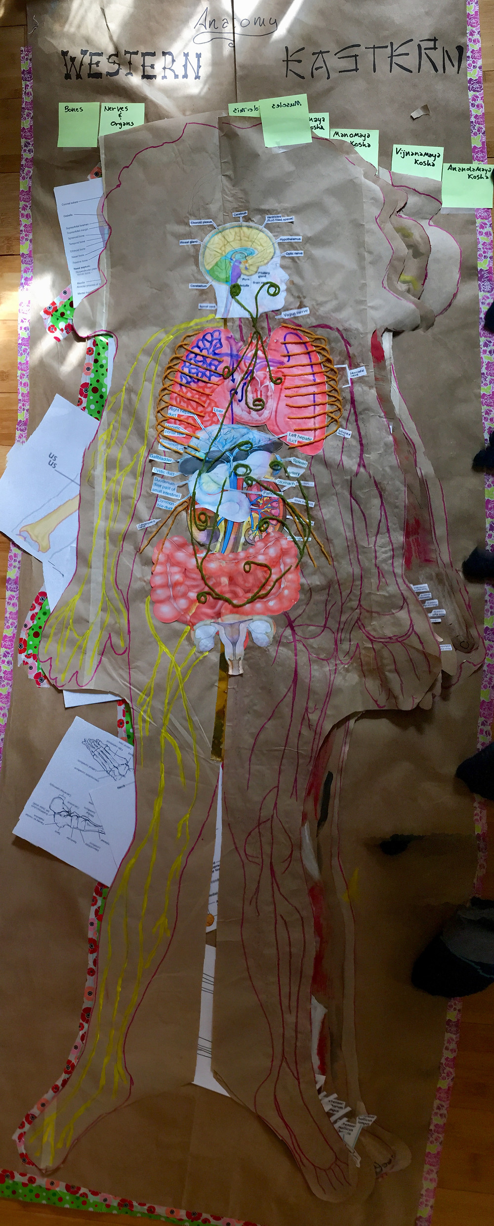 this layer of the paper figure is pasted images printed off Google and yellow nerves made of yarn or paint with the vagus nerve being green arteries are pink marker and veins are blue highlighter