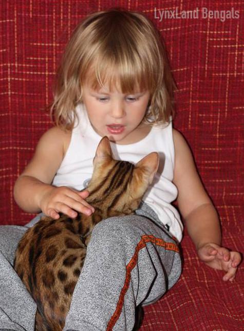 Kočka bengálská - hypoalergenní?